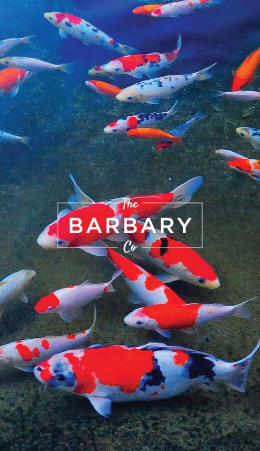 TheBarbaryCo